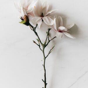 Bloom beauty schoonheidssalon brows permanente makeup workshop make-up brugge